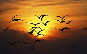4262_Birds-fly-in-orange-light-of-sunset
